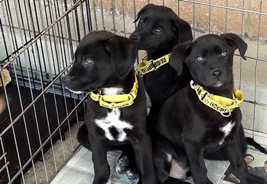 Puppies waiting for their forever home.